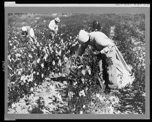 Plantação de algodão no sul dos EUA, berço do Blues