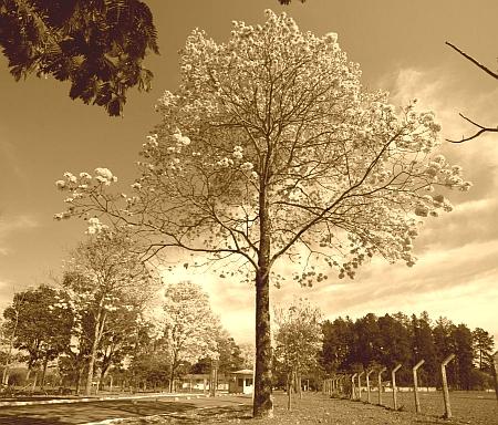 """A bucólica imagem """"interiorana"""" do Campus Samambaia da UFG"""